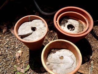 コンクリートと植木鉢